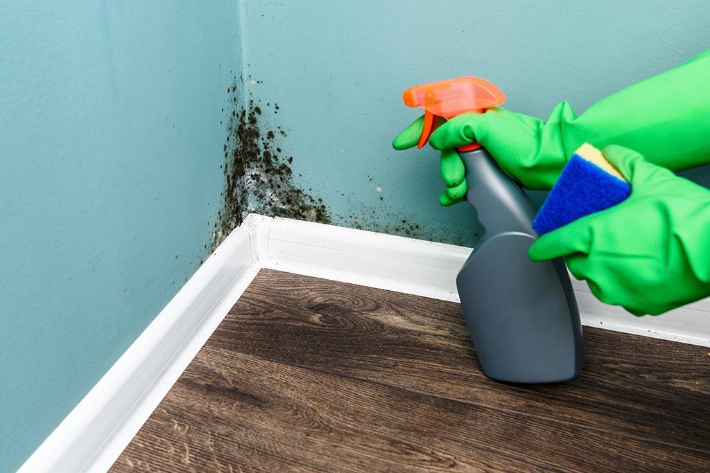 limpiar de moho las paredes