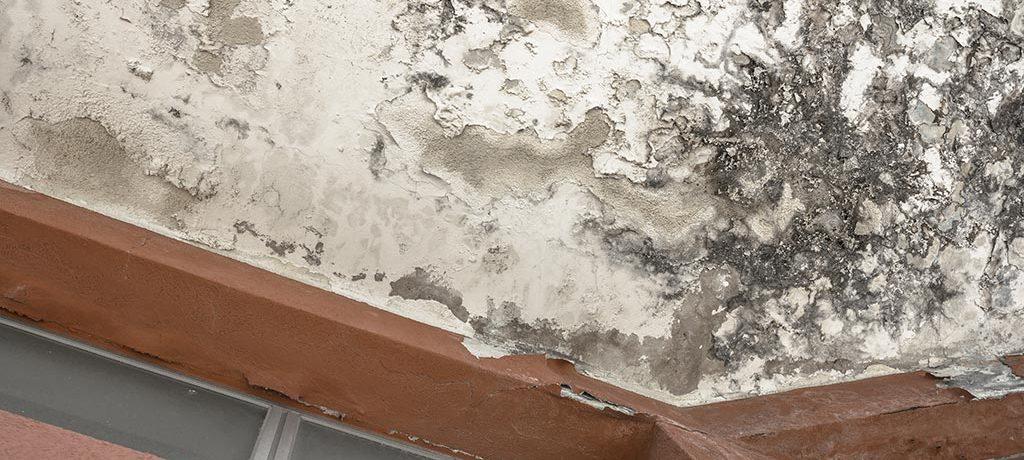 como-eliminar-moho-techos